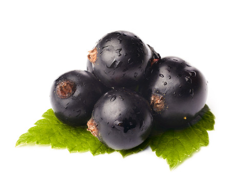 Black currants isolated on white photo