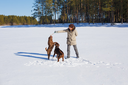 sharpei: Woman playing with her dogs on a winter sunny day