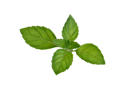 retouched: Fresh mint leaves. Spearmint tops. Large depth of field, fine details. Retouched to resemble painting Stock Photo