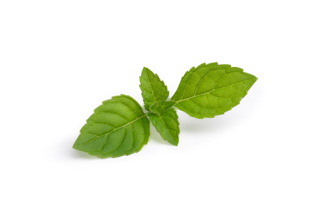 Fresh mint leaves. Spearmint tops. Large depth of field