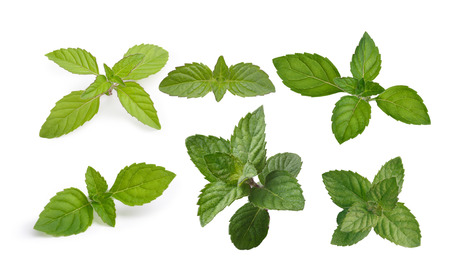 Variety of mint leaves isolated on white Zdjęcie Seryjne