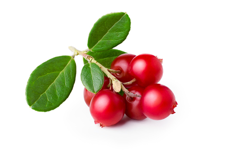 Wild cowberry (foxberry, lingonberry) with its leaves. Studio shot, large depth of field,retouched Zdjęcie Seryjne