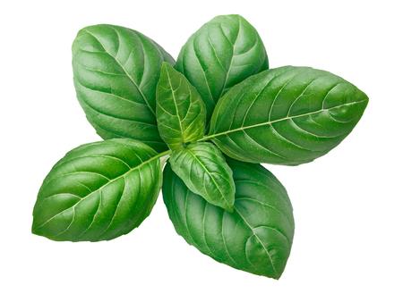 albahaca: hojas de albahaca Genovese (tops). Los trazados de recorte, infinita profundidad de campo