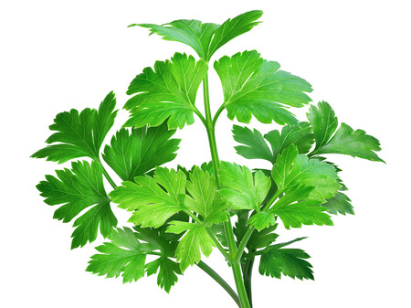enhanced: Flat-leaved parsley. Clipping path, infinite depth of field, enhanced colors