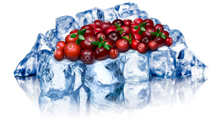 wildberry: Heap of wild cranberries freezing on rough crushed ice. Clipping path, large depth of field