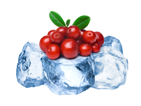 wildberry: Heap of wild lingonberries freezing on rough crushed ice. Clipping paths for both berries and whole composite