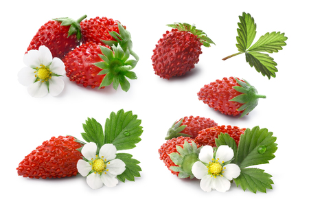 Set of woodland strawberry (Fragaria vesca, fraise de bois)  with flower. Stock Photo