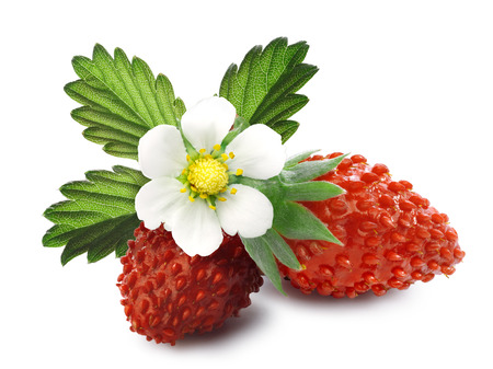 fragaria: Woodland strawberry (Fragaria vesca, fraise de bois)  with flower. Separate clipping paths for shadows and berries, infinite depth of field.