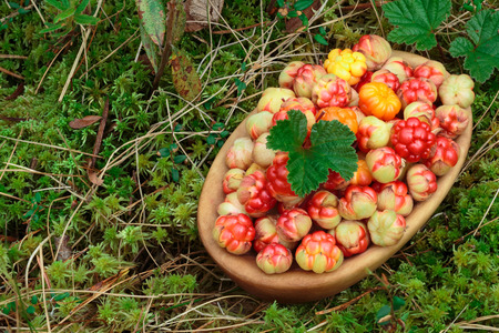 rubus: Bowl of cloudberries (Rubus Chamaemorus) with leaves standing on moss. Large depth of field, background, copyspace Stock Photo