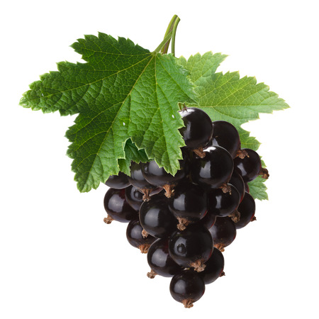 ribes: Hanging blackcurrant bunch (Ribes Nigrum) with leaves. Clipping path, infinite depth of filed Stock Photo