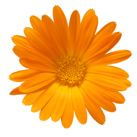 clipping: Calendula officinalis flowers. Clipping path, infinite depth of field