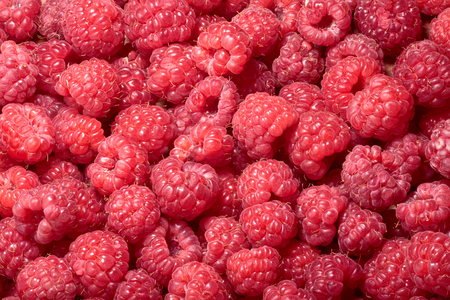 rubus: Raspberry (Rubus idaeus) background. Infinite depth of field Stock Photo