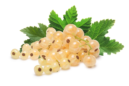 Whitecurrant bunch (Ribes Rubrum) with leaves. Clipping paths, shadow separated, infinite depth of filed Stock Photo