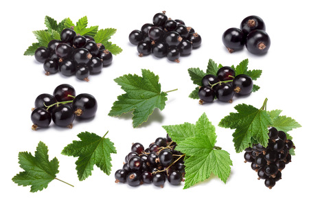 Set of blackcurrant berries (Ribes Nigrum) and leaves. Infinite depth of fiedl, clipping paths, shadows separated