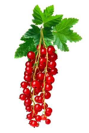 ribes: Hangingl redcurrant bunch (Ribes Rubrum) with leaves. Clipping paths, infinite depth of filed Stock Photo