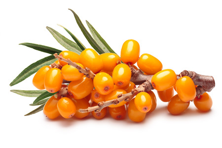 Branch of sea buckthorn berries with leaves.  shadow separated, infinite depth of field. Design elements Stock Photo