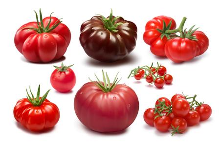 acordeon: Colección de diferentes cultivares de tomate. Diversas formas y colores. Tomates de la herencia. sombras separadas, infinita profundidad de campo. Elementos de diseño