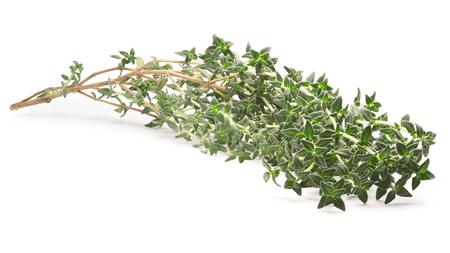 thymus: Thyme (Thymus vulgaris) shrub. Fine herb.