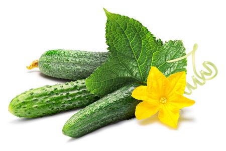 gherkins: Cucumbers (gherkins), with flower, leaf, tendril. Stock Photo