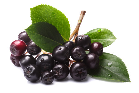 Aronia melanocarpa (black chokeberry) with leaves.