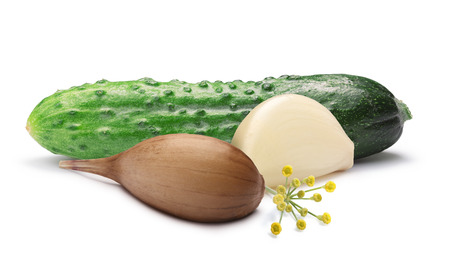 gherkin: Garlic dill pickle. Gherkin (tiny cucumber or cornichon) for pickling. Stock Photo