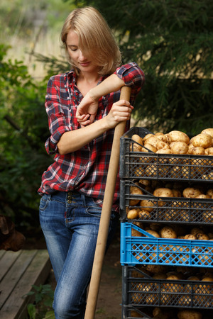 fall harvest: Woman leaning on a plastic boxes of potato. Horticulture, harvest, local farmer concept