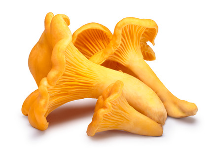 cantharellus: Chanterelle or girolle mushrooms (Cantharellus cibarius). Clippng paths, shadow separated Stock Photo