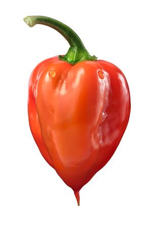 pedicel: Orange Habanero pepper (Capsicum chinense), fresh, ripe, with pedicel. Clipping path
