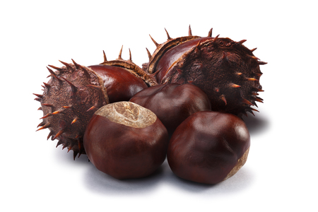Whole and husked horse chestnuts (fruits of Aesculus hippocastanum). Clipping paths, shadow separated