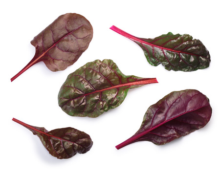 Top view of Leaves of Swiss chard or Mangold (Beta vulgaris subsp. Cicla-Group). Clipping paths, shadows separated