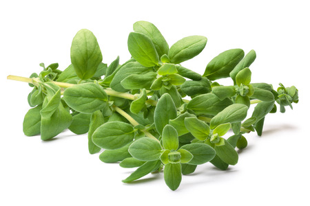 Fresh Marjoram (Origanum majorana), cut stem with leaves. Clipping paths, shadows separated