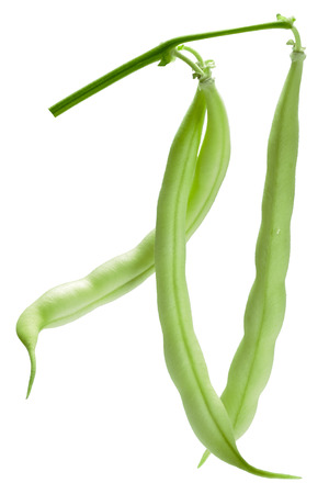 Hanging haricot bean (Phaseolus vulgaris) pods alone. Clipping path