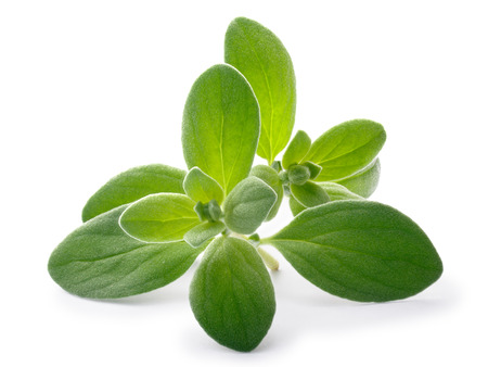 Fresh Marjoram (Origanum majorana), tops, close up. Clipping paths, shadows separated Stock Photo