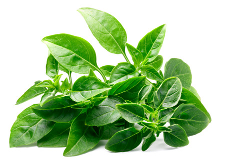 Pile of fresh leaves of small-leaved sweet Spicy Globe or Fine Verde Basil  (Ocimum basilicum). Clipping paths, shadow separated Stock Photo