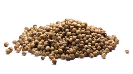 coriandrum sativum: Pile of dried Coriander or Cilantro seeds (Coriandrum sativum fruits). Clipping paths, shadow separated