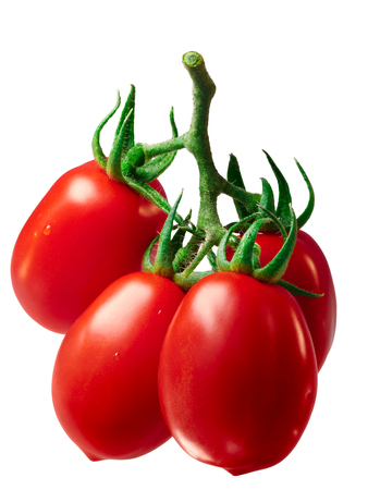 Cluster of fresh plum processing Roma VF tomatoes (Solanum lycopersicum), on vine. Clipping path, shadowless Stock Photo