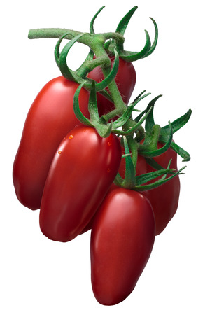 Cluster of fresh paste San Marzano tomato (Solanum lycopersicum), on vine (TOV). Clipping path, shadowless