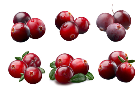 Wild cranberries (Vaccinium oxycoccus) with leaves arranged by three. Clipping paths, shadows separated Stock Photo