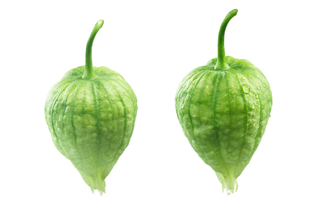 Tomatillos (Physalis philadelphica) in their own husks, with and without dewdrops, hanging. Clipping paths Stock Photo