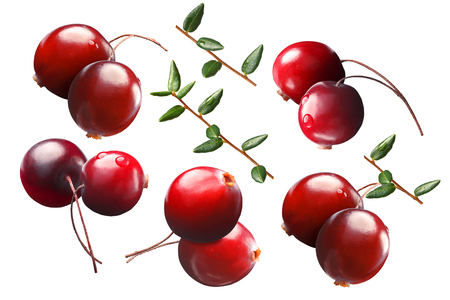 deign: Cranberry design elements, two berries with stalks (pedicels), branches, leaves. Clipping path for each berry, shadowless
