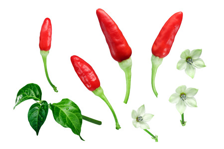 Tabasco chile peppers (Capsicum frutescens) with leaves and flowers, exploded view (design elements). Clipping paths for each object