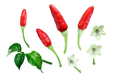 Tabasco chili pepers (Capsicum frutescens) met bladeren en bloemen, exploded view (ontwerpelementen). Uitknippaden voor elk object