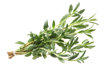 Bundle of fresh Hyssop (Hyssopus officinalis). Clipping path Stock Photo