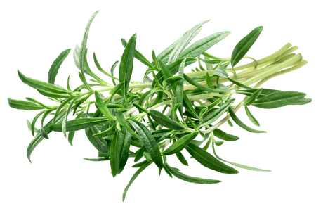 Bundle of Summer Savory (Satureja hortensis), fresh. Clipping path