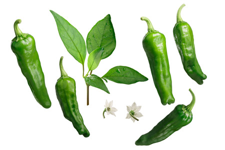 Shishito chile peppers, leaves, flowers, exploded view (design elements). Stock Photo
