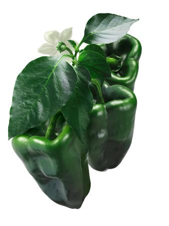Ancho 그란데 칠레 고추 (고추 아눔), 녹색, 성장. 클리핑 패스