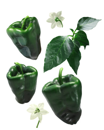 blocky: Ancho Grande chile peppers (Capsicum annuum), exploded view (design elements). Clipping path for each piece Stock Photo
