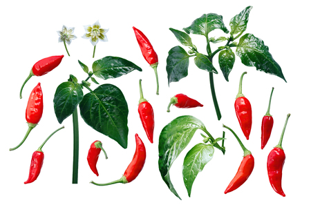 Aji Brazilian Bonanza pepper (C. baccatum), exploded view (elements). Clipping paths for each piece