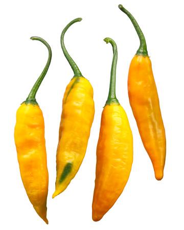 Aji Giallo Arancio pepper (Capsicum baccatum). Stock Photo