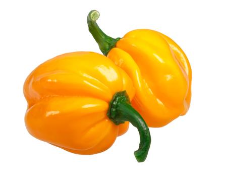 Numex Suave Orange chile peppers (Capsicum chinense, Habanero type). Archivio Fotografico
